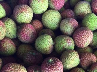 ライチの品種(玉荷包)