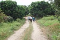 ペルーマンゴー産地1