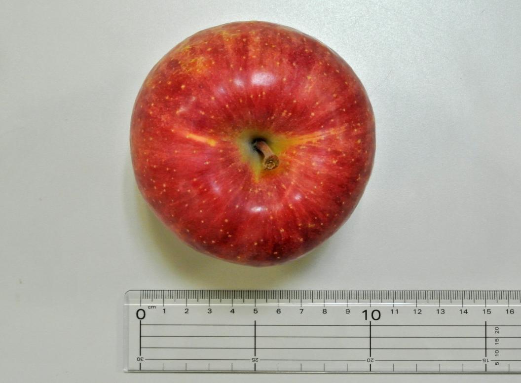 りんごの幅