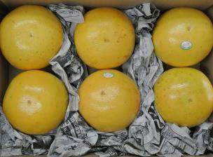 グレープフルーツ6個入り箱