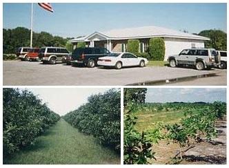 グレープフルーツの農場