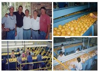グレープフルーツの生産者