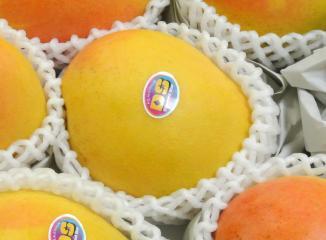 ピーチマンゴーの色合い(黄色)
