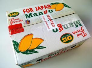 タイマンゴー6個入り箱