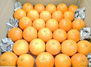 ネーブルオレンジ30個入り箱