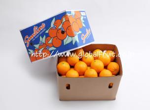 ネーブルオレンジ72個入り箱
