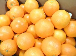 ネーブルオレンジ88個入り箱