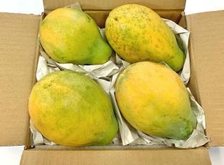 ハワイ産パパイヤ5個入り箱