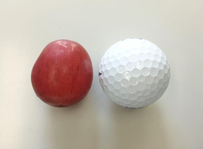ルビーロマンの大きさ(対ゴルフボール)