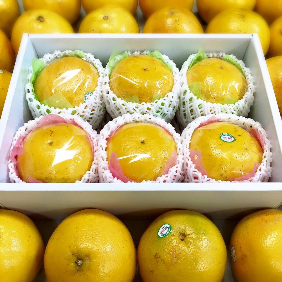 グレープフルーツ販売終了2016年