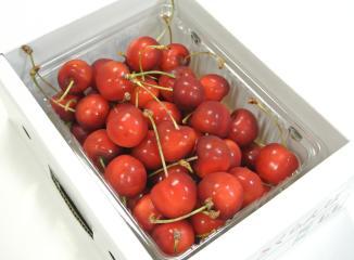 さくらんぼの品種(紅秀峰)