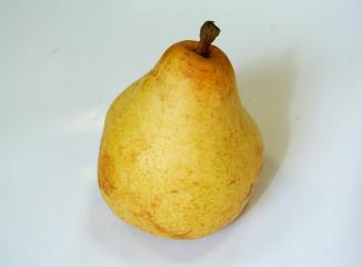 西洋梨の品種(オーロラ)