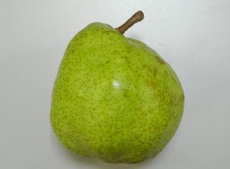 西洋梨の品種(ラフランス)