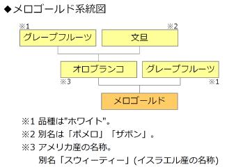 メロゴールド系統図