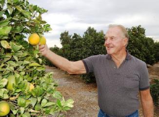 ネーブルオレンジの生産者