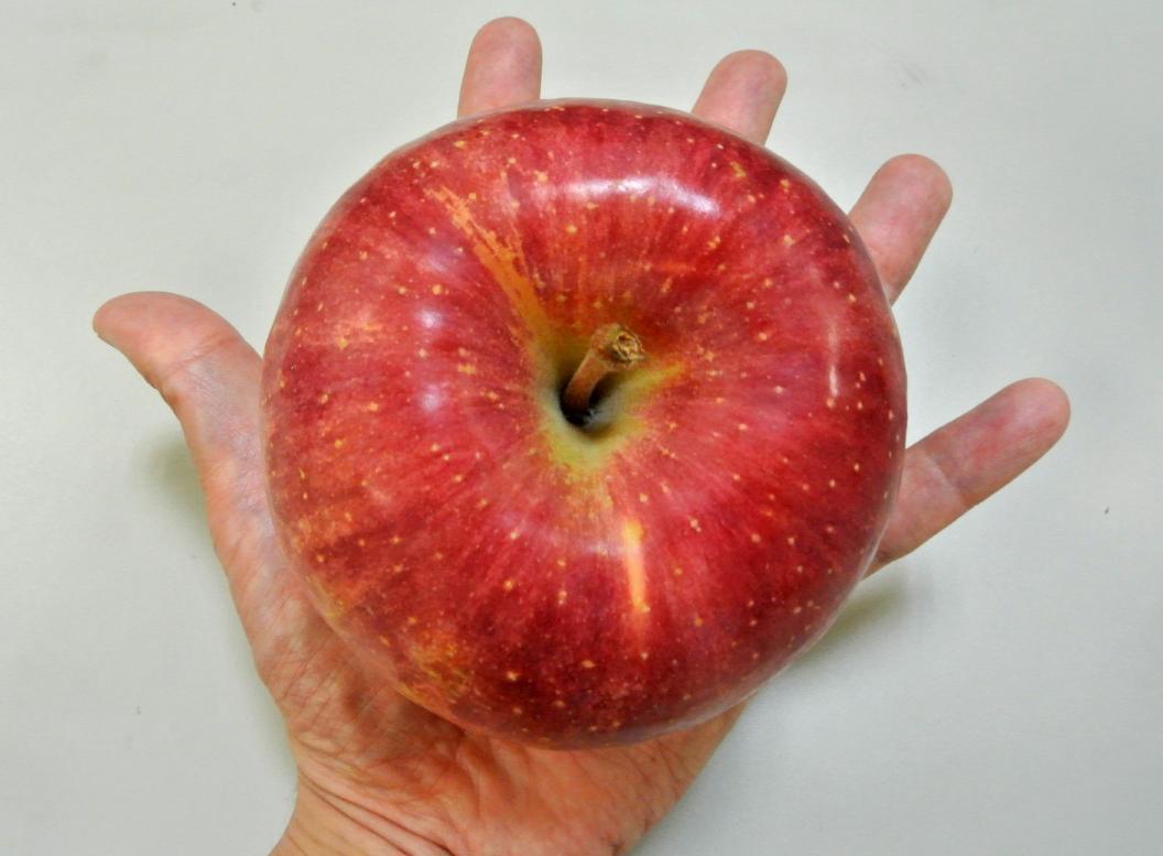 手のひらの上のりんご