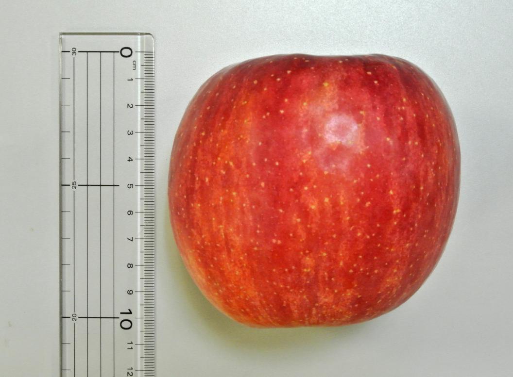りんごの高さ