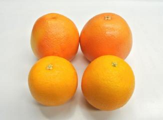 グレープフルーツ(スタールビー)とバレンシアオレンジ