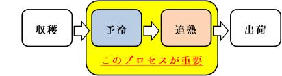 西洋梨(オーロラ)の熟度コントロール