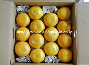 グレープフルーツ14個入り箱