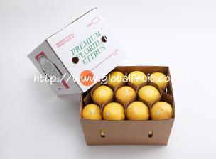 グレープフルーツ32個入り箱