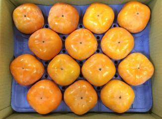 浜北次郎柿(露地栽培)