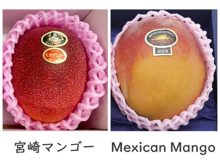 宮崎マンゴーとメキシコマンゴーの比較ディスプレイ