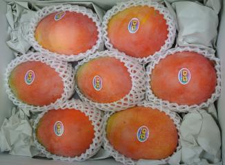 マチルバマンゴー