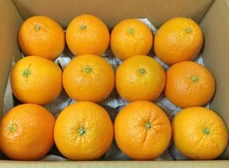 ネーブルオレンジ12個入り箱