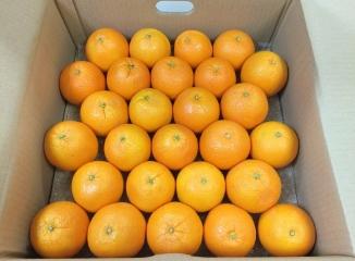 ネーブルオレンジ27個入り箱