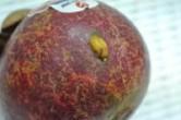 マンゴスチンの果皮に黄色のものがついていますが、食べても問題ないでしょうか