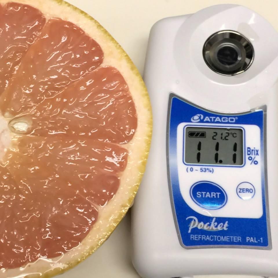 グレープフルーツ糖度11度