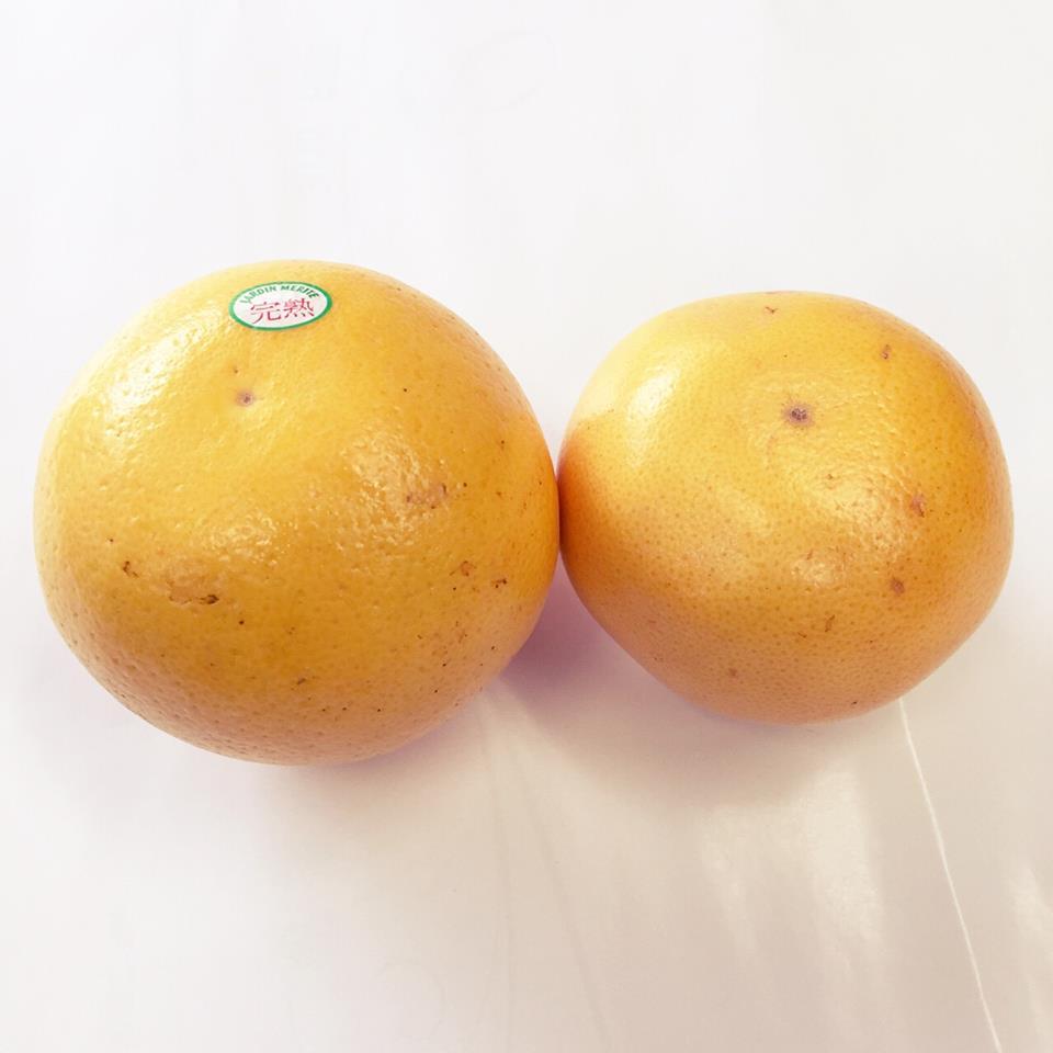 グレープフルーツの大きさ比較