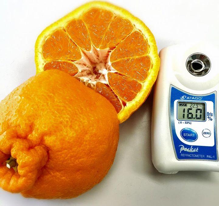 デコポン糖度16度