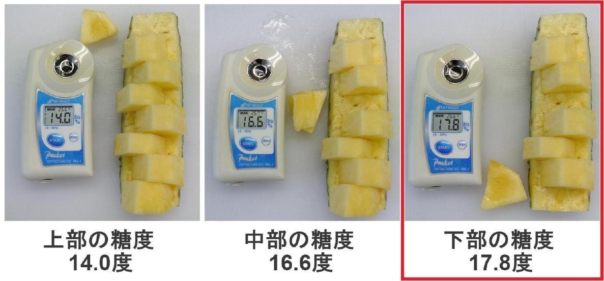 パイナップルの弊社史上最高糖度を記録