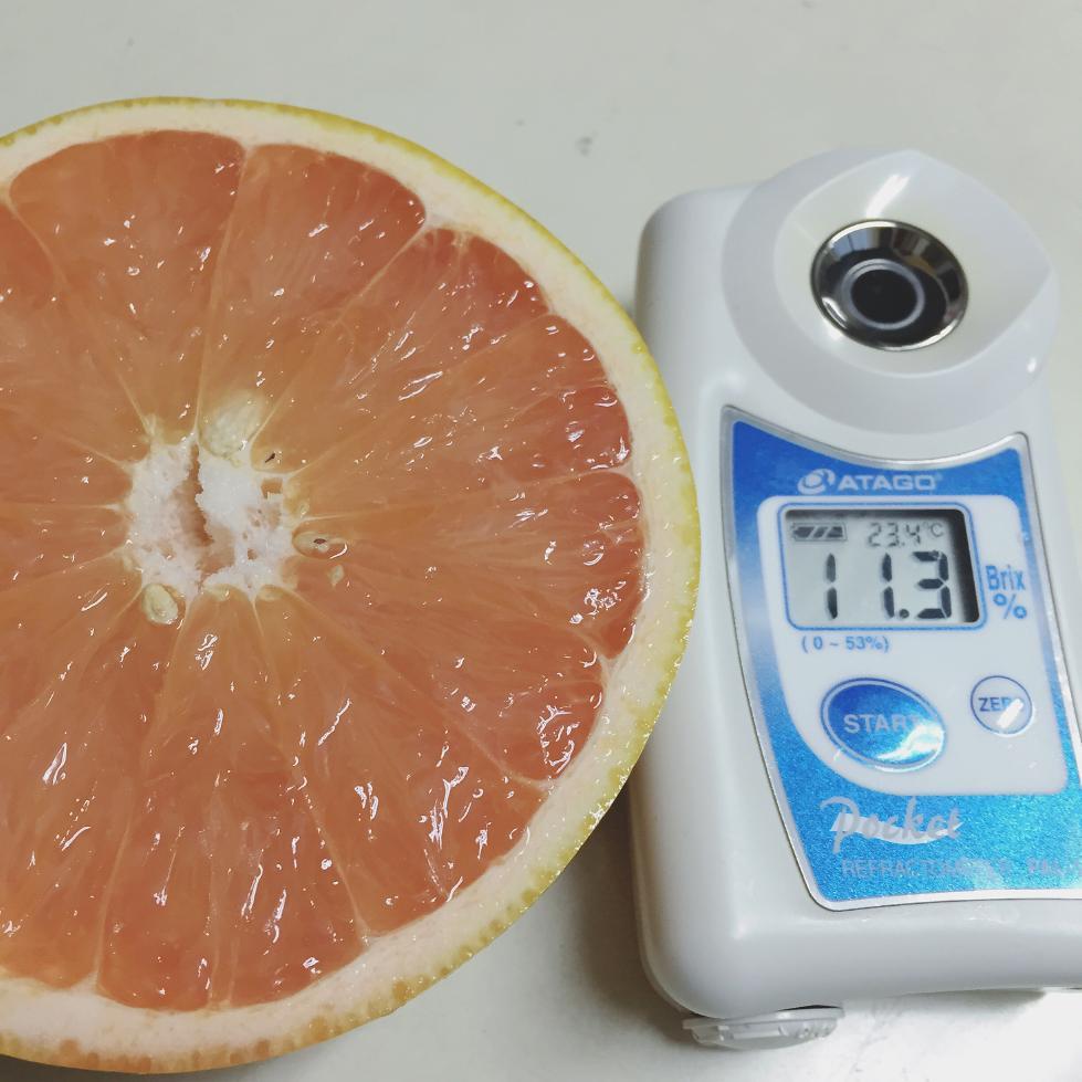 グレープフルーツ糖度
