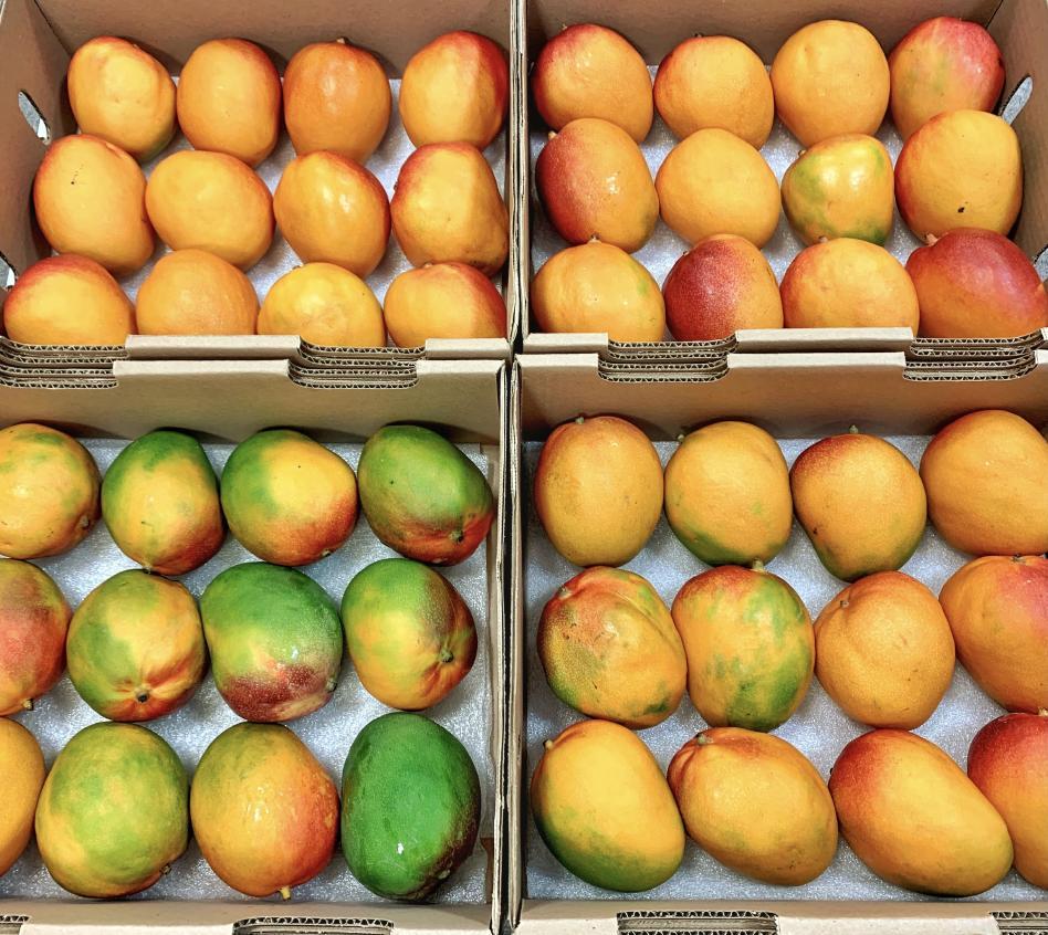 追熟後のマンゴー