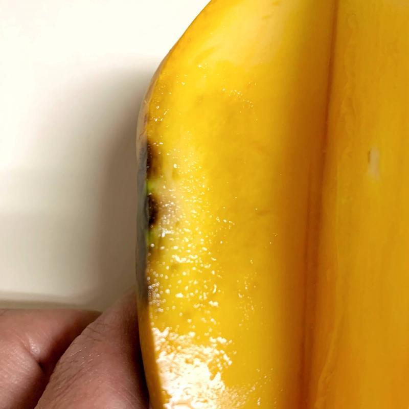 マンゴーのタンソ病
