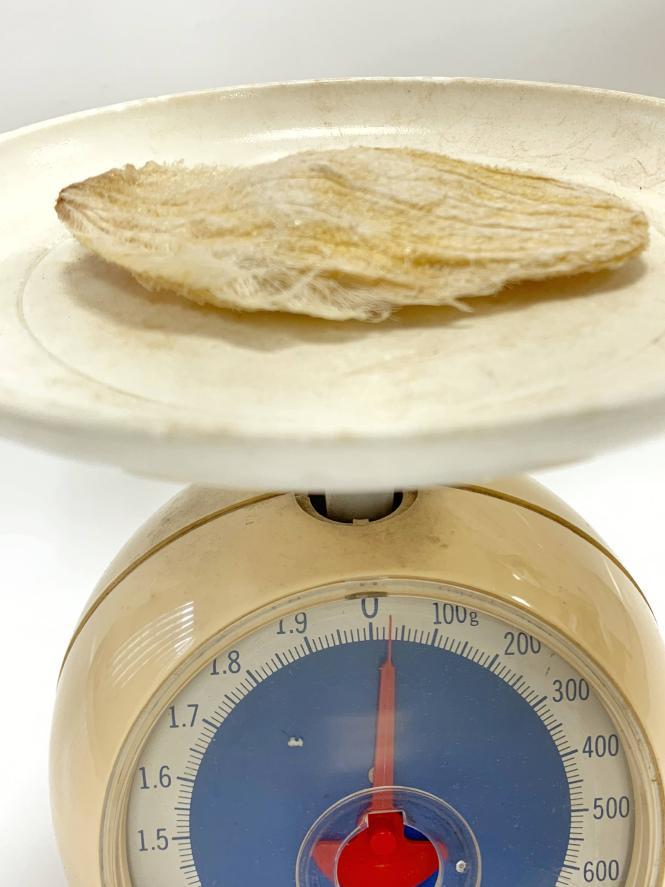 マンゴーの種の重量